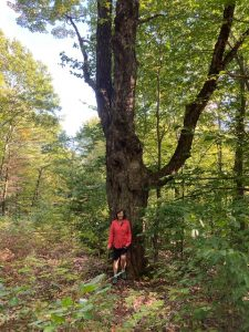 Wolf Tree SRK Greenway